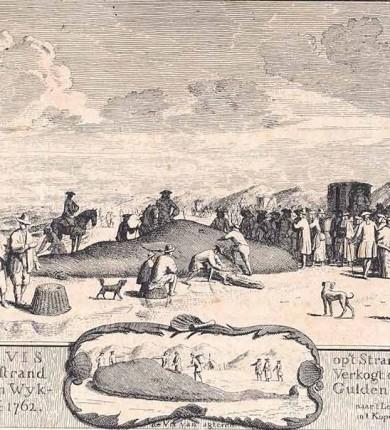 walvis-prent1000px